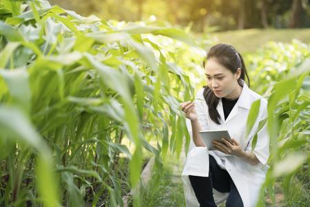 Biotechnologie vrouw ingenieur onderzoekt plant blad voor de ziekte
