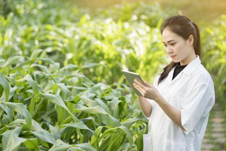 질환에 대한 식물 잎을 검토 생명 공학 여성 엔지니어 스톡 콘텐츠