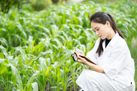 Biotechnology asian woman engineer examining plant leaf for disease, science and research experimental test concept