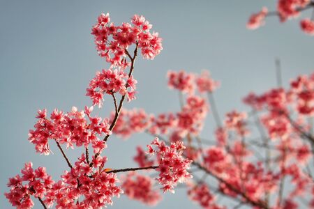 once: Such a beautiful shot of pink blossom in the end of winter. I love this moment because once a year that we can sew this.