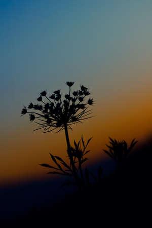 bonsoir: Printemps bonne soir�e fleur