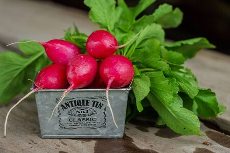 ripe red radish  lying in metall basket on a wooden background