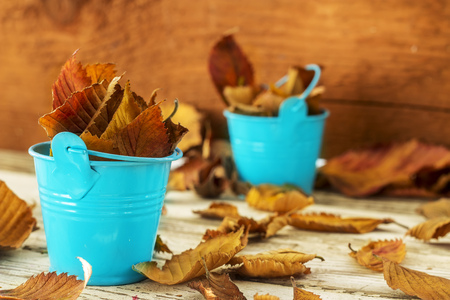 metall: Autumn Yellow leaves in the blue metall bucket