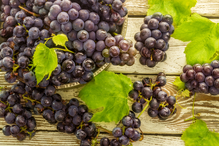 frash: Blue frash grapes in old metal bowl with scissors on the wooden background