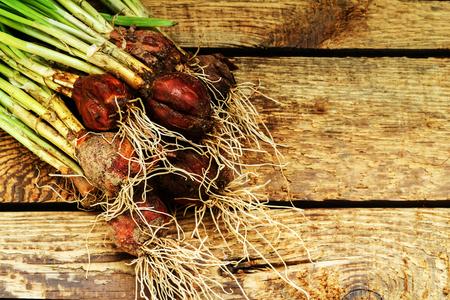 cebollines: Cebolla verde sobre fondo de madera