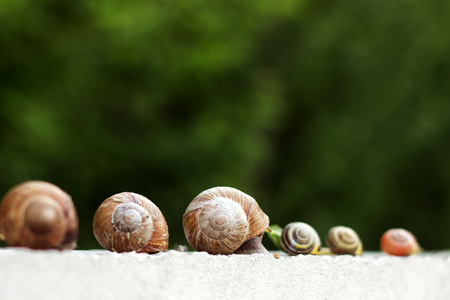 Several snails creep along the fence in the garden Stock Photo