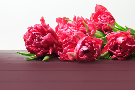 Spring red and pink tulips on white background. Wide panoramic floral border with space for text