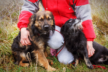 Woman hands with two abandoned homeless stray dogs sitting on the dry grass