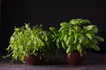 Culinary Herbs Set: Basil and Rucola on black background Stock Photo - 128012476