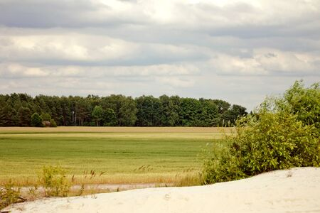Belarus, The part of sandy beach, field and pine forest on background
