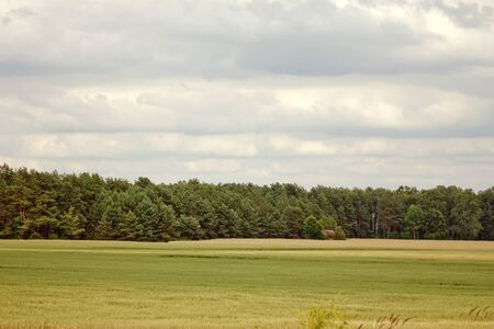 Belarus, The field and pine forest on background