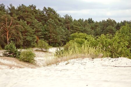 Belarus, The sandy beach is a pine forest on background