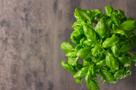 Fresh basil and spices. On a black wooden background. Top view. Free copy space.