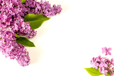 The beautiful lilac on a white wooden background 免版税图像