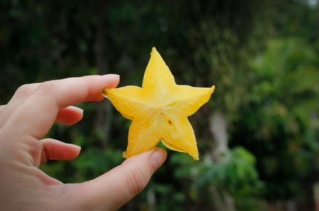 Cut a slice of star fruit in hand. Asian Exotic Fruits
