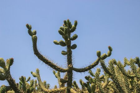 Wild cactus in nature. Desert landscapes Banco de Imagens