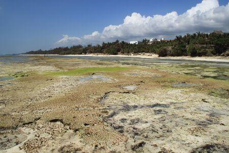 Low tide on Diani Beach, the coast of the Indian Ocean. Kenya, Africa Banco de Imagens