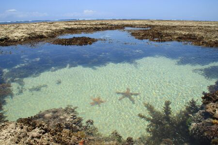 Starfish lie in the turquoise salt water of the Indian Ocean among the coral reefs at low tide