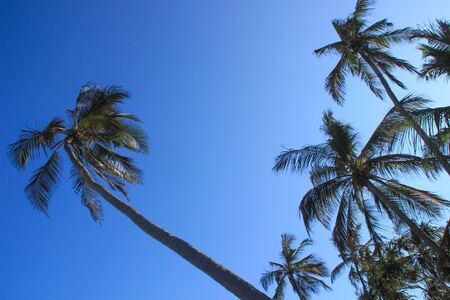 Palm coconut trees and bright blue sky on the beach of the Indian Ocean