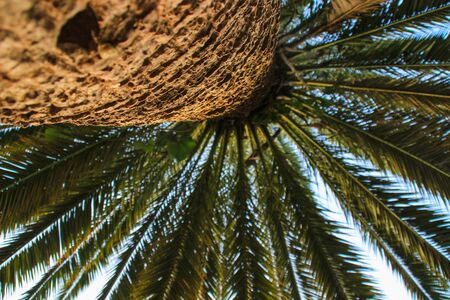 A palm tree trunk and bark with leaves against a bright sky. Natural floral background Banco de Imagens