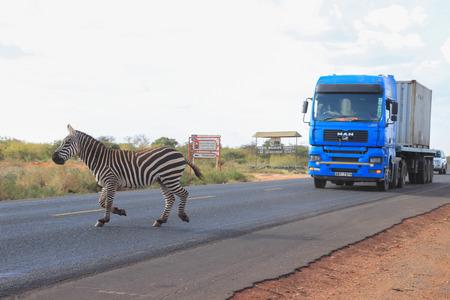 Tsavo National Park, Kenya - January 19, 2015: Zebras cross the road in Tsavo National Park. Kenya