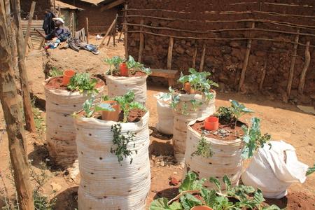 Kibera, Nairobi, Kenya - February 13, 2015: Growing vegetables in ground packs in Nairobi slums is one of the poorest places in Africa. Editorial