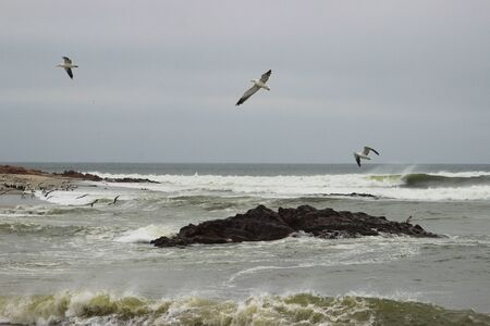 Strong waves on the coast of the Atlantic Ocean in Namibia and sea gulls soaring above the water.