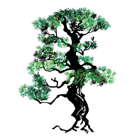 Illustration of pine tree Handwritten style