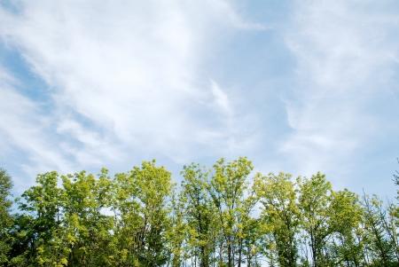 柔らかい緑と青い空