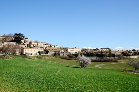 the luberon: Green grass and pink flower in Murs in spring,March,the village in Luberon,South France