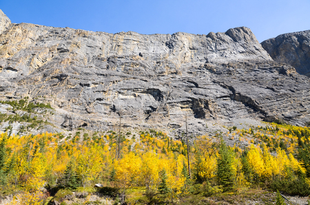 canadian rockies: ???????????????????????????? ?Icefields Parkway in Autumn, Canadian Rockies