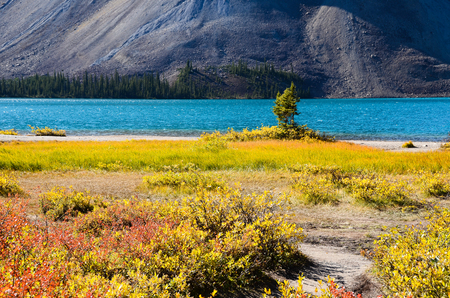 canadian rockies: ?????????????????Bow Lake in Autumn, Canadian Rockies