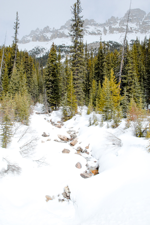 rockies: Stream Covered With Snow in Winter, Canadian Rockies, Alberta, Canada
