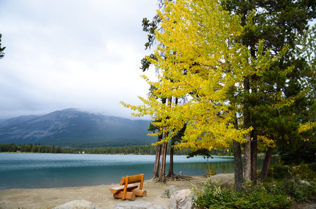 ???????????????????????? ?Bench and Yellow Leaves at side of Edith Lake, Canadian Rockies