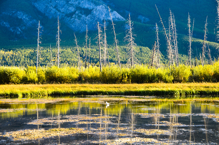 Vermillion Lake in Autumn Evening, Canadian Rockies