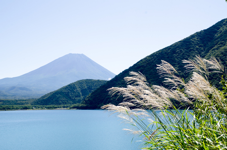 Mt. Fuji with Japanese Pampas Grass in Autumn at the Side of Motosu Lake, Japan Stock Photo