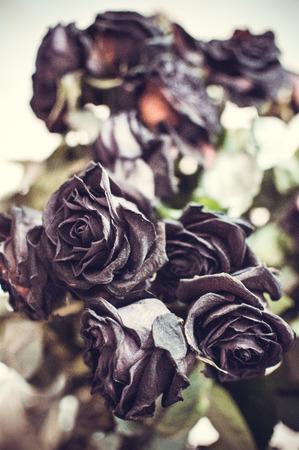 fiori secchi: fiori secchi Archivio Fotografico