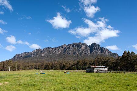 Farm shade in farmland near Mt Roland, Tasmania, Australia