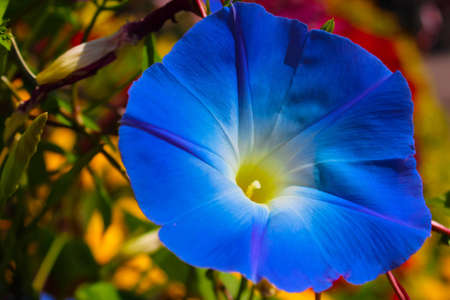Blue flower colorful in garden Stock Photo - 16515616