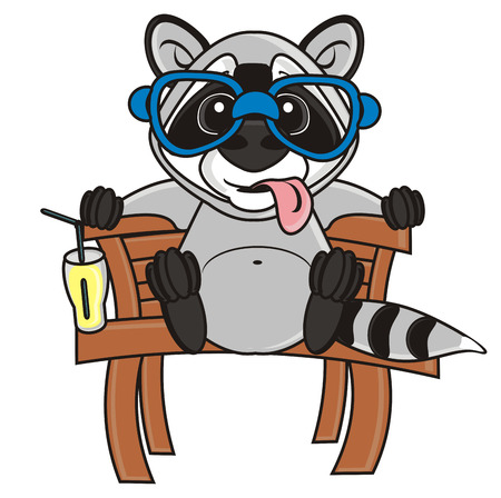 protruding: raccoon sitting on a bench with his tongue out Stock Photo