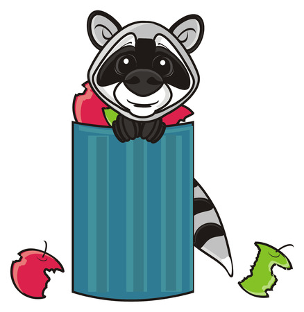 wheeled: muzzle raccoon peeking out wheeled bin Stock Photo