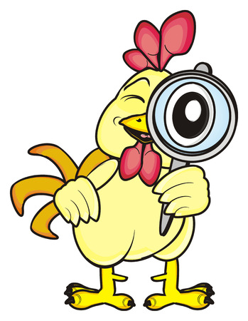 chicken coop: Rooster standing and looking through a magnifying glass Stock Photo