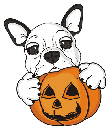 october 31: french bulldog puppy holding a pumpkin