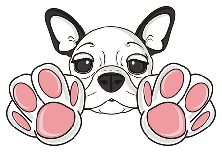 franse bulldog puppy paw handen