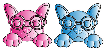 bulldog puppy: french bulldog puppy with glasses in pink and blue colors with white lines