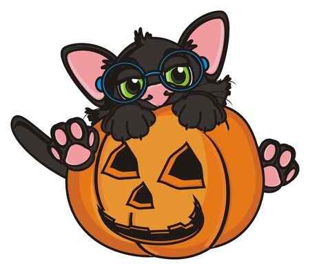 october 31: cat in glasses sit in pumpkin