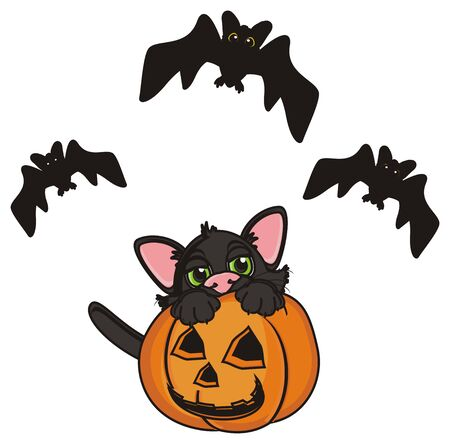 fly around: cat sit in pumpkin and bats fly around