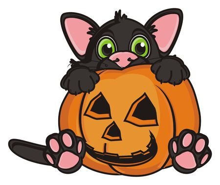 stick out: scary black cat stick out from the pumpkin