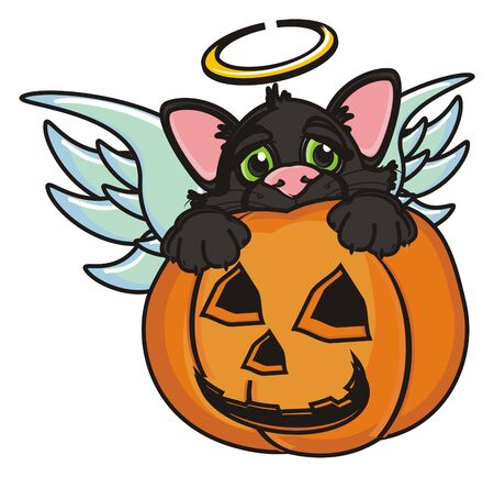 angel blacj cat sit in pumpkin