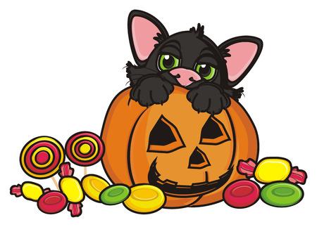 31: black cat sit in pumpkin aroun many candy